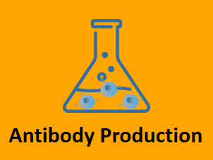 antibody production