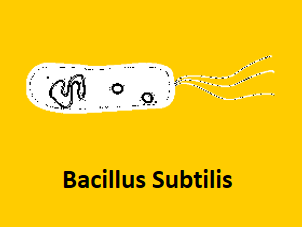 bacilus subtilis protein expression system